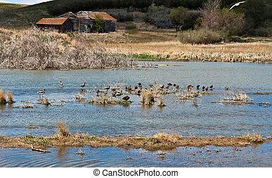 Water Birds on The Prairie