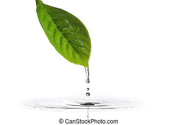 water, blad, het droppelen