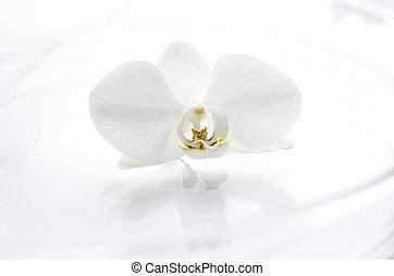 water, bloem, orchidee