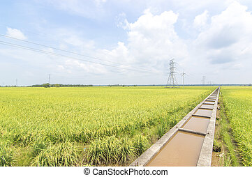 Water canal for paddy rice field irrigation with blue skies