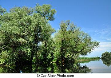 Water channel, river in Danube delta, Romania