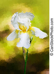 water color drawing of  Iris flower