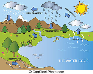 water cycle - illustration of funny water cycle