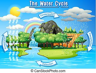 Water cycle process on Earth - Scientific