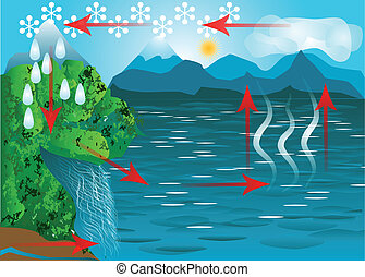 water cycle. schematic representation of the water cycle in...