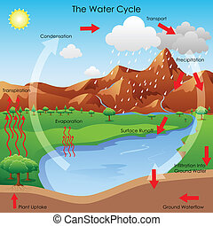 Water Cycle - vector illustration of diagram showing water...