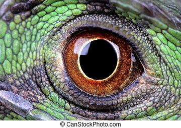 water dragon eye - a macro of a fantastic green iguana eye