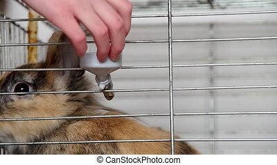 Water drinker for a dwarf rabbit in a cage