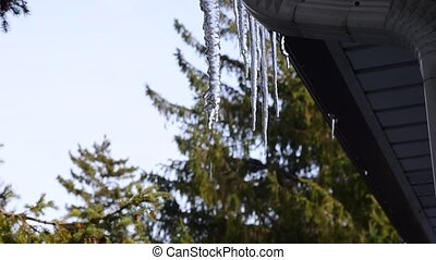 Water dripping off melting icicle under roof. - Water drops...