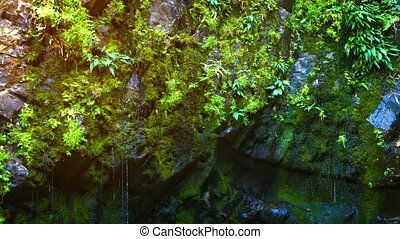 Video 1920x1080 - Water slowly drizzling and dripping down a natural, mossy cliff face into a pond at the bottom.