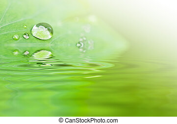 water drop and green leaf