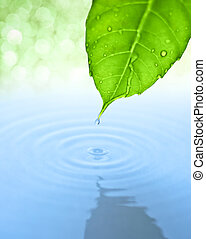 Water drop fall from green leaf with ripple