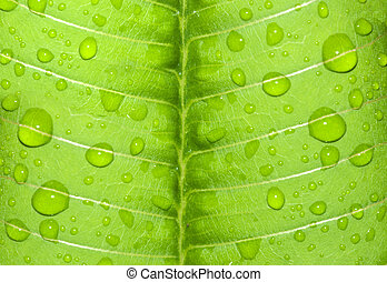 water-drop on a green leaf after rain