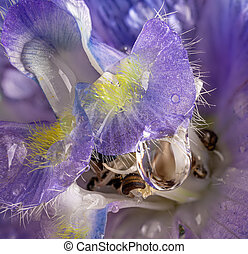Water Drop on a Larkspur Flower - Macro photo of a water ...