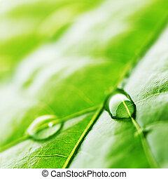 Water drop on green leaf