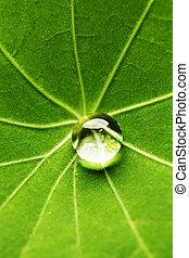 Water drop on green leaf - Water drop on green Nasturtium ...