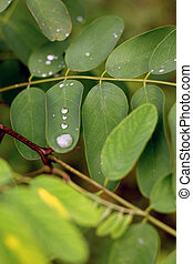 Water drop on the green leaves after rain