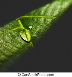 Water drop on the leaf surface, abstract natural background