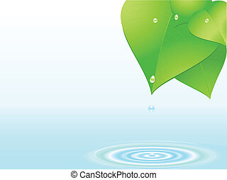 water droplet and ripple - water dripping from lush green...