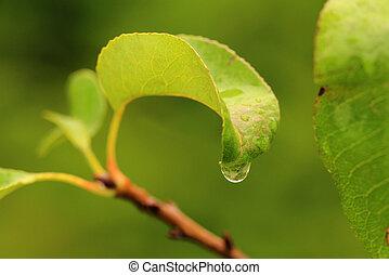 water droplet on leaf macro