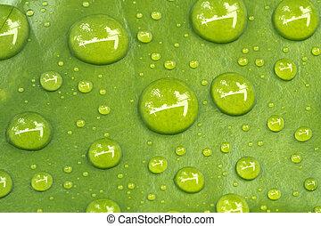 water, droplets, bladeren