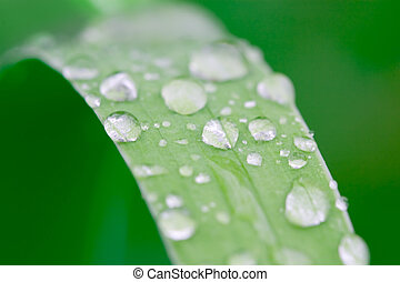 water droplets on a grass blade