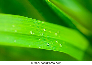 water droplets on the grass