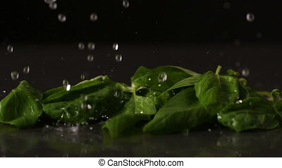 Water dropping onto fresh basil leaves in slow motion