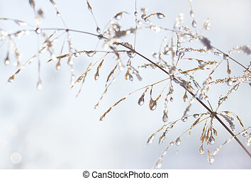 Water drops and ice peaces on plant stems.