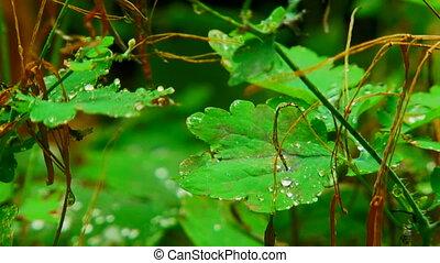 Water drops. Close-up