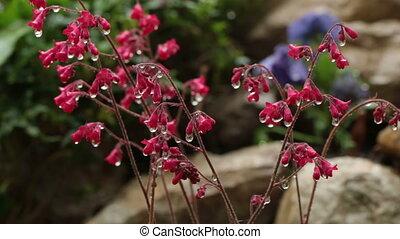Water drops falling on flower