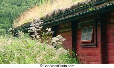 Water drops from grass on Norwegian wooden house roof