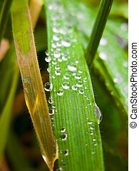 Water drops in nature