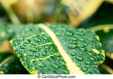 Water drops of freshness in nature.
