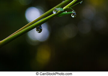 Water drops on bamboo.