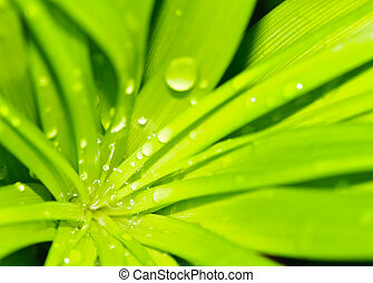 Water drops on fresh green leaves in spring