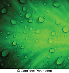 Water drops on green leaf macro background. Vector