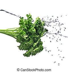 water drops on green parsley isolated on white