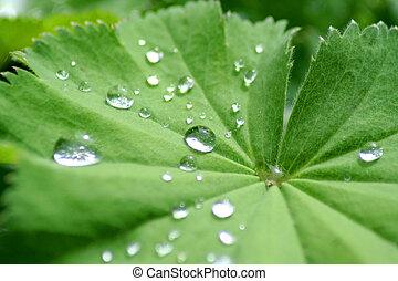 water drops on lotus flower