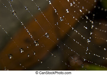 Water drops on spider web