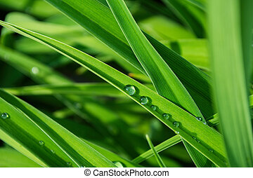 Water drops on the green grass. Macro photo. Selective focus, shallow depth of field.