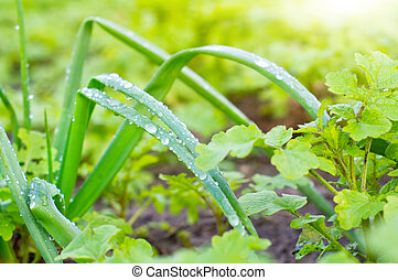 water drops on the green vegetation