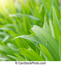 Water drops on the spring green grass