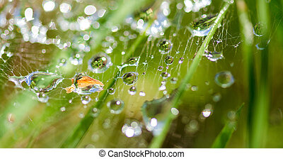 Water drops on the web as a background