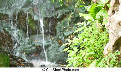 Water drops river mountain - Closeup of spring water and...