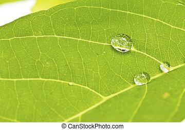 water-drops, su, verde