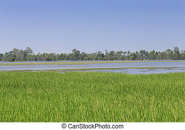 Water flooding rice fields in Thailand.