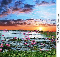 Water flora - Lotos on lake
