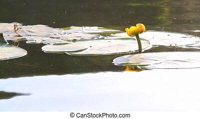 water flowers