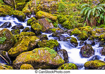 Water Flowing through Coastal Wet Mountains of Washington